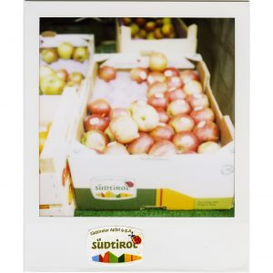 George Morrison's Trip Around the World / Calendar 2017 / Fruit Labels Traveler